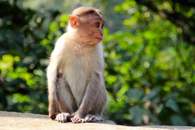 猿 小さい ひとりぼっち よそ見
